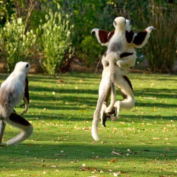 lemuri madagascar