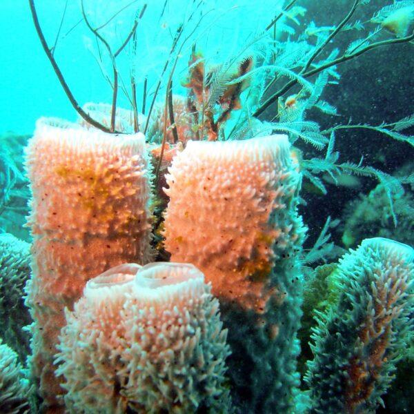 piante sottomarine