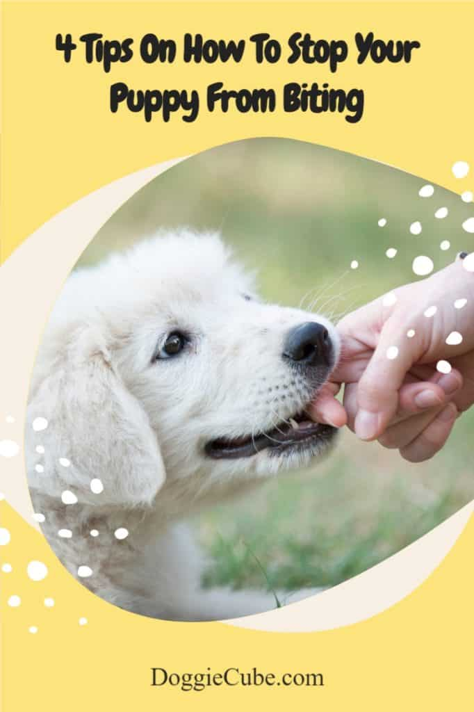 4 Tips On How To Stop Your Puppy From Biting