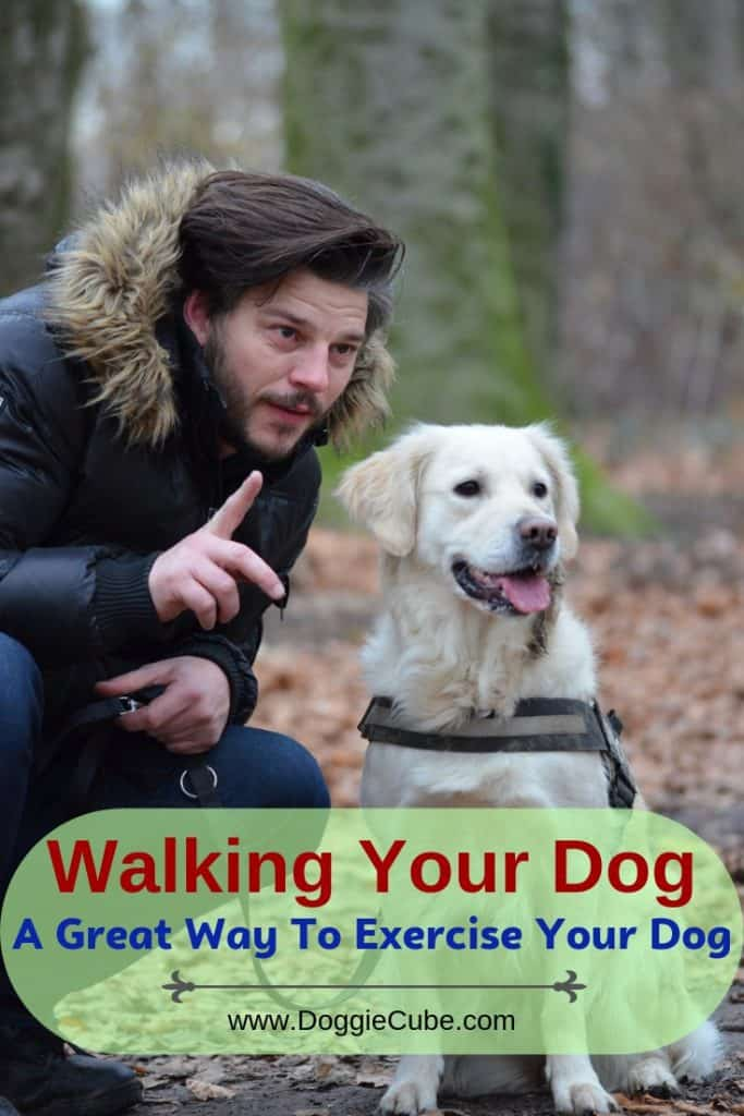 Walking your dog is a great way to exercise.