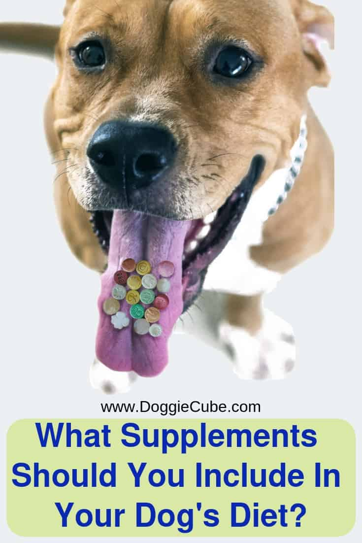 What types of dog supplements should you add to your pet's diet