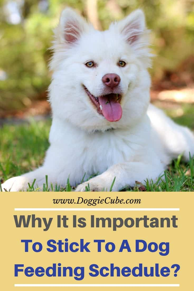 Why it is important to stick to a dog feeding schedule?