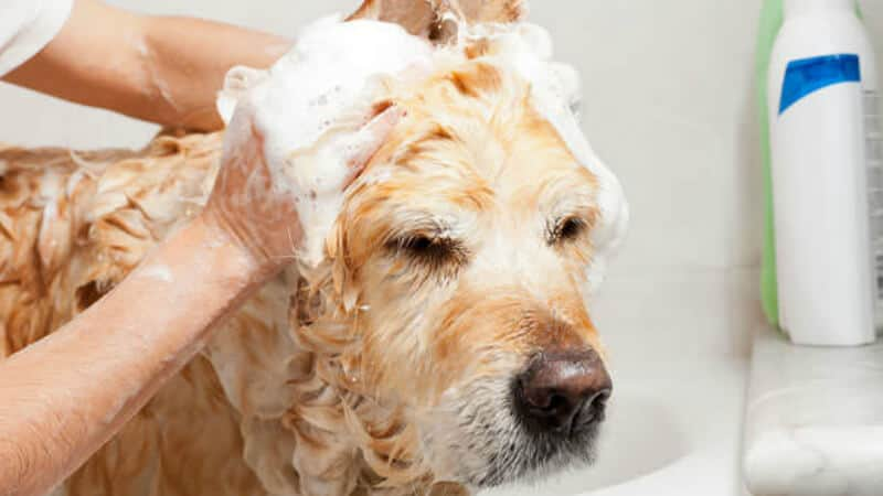 Best type of shampoo for your dog