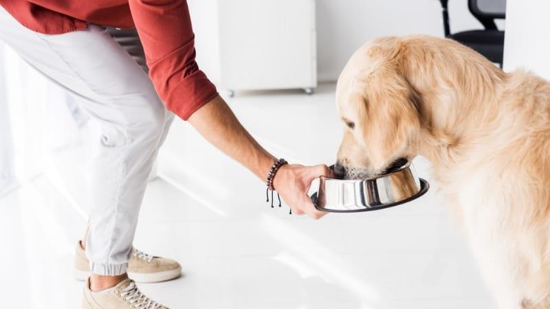 Dog feeding on schedule