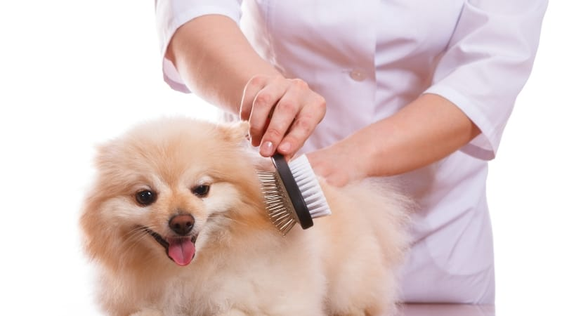 Brushing a dog with a combination pin and bristle brush