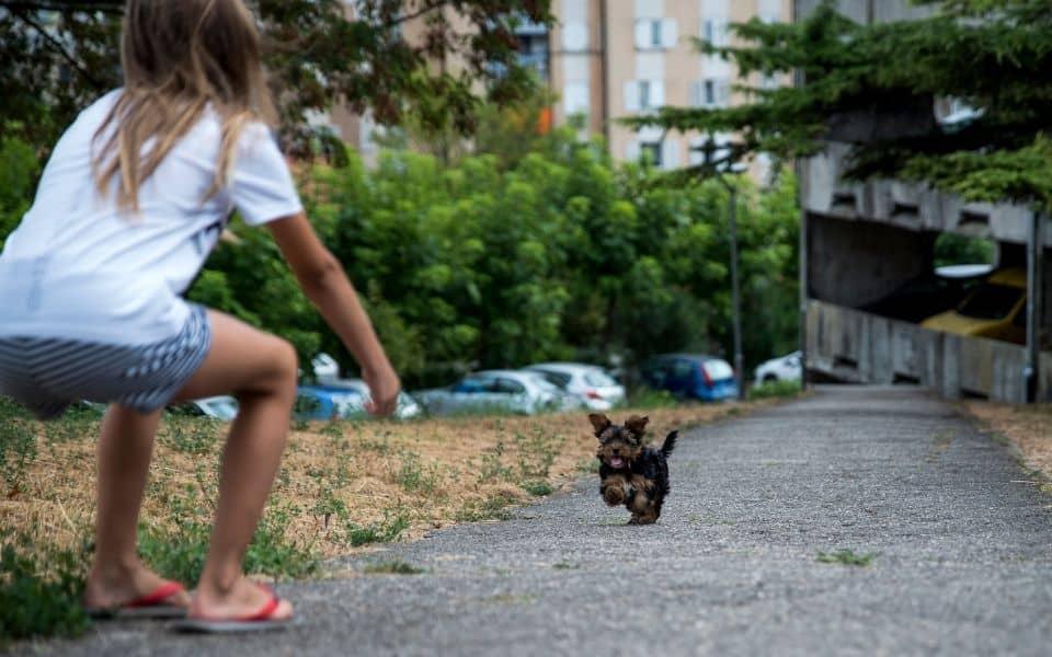 Puppy running towards owner