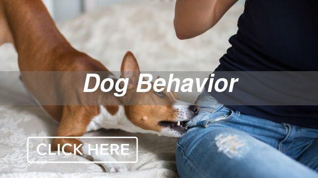 Dog Behavior Category