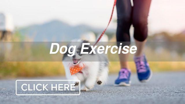 Dog Exercise Category