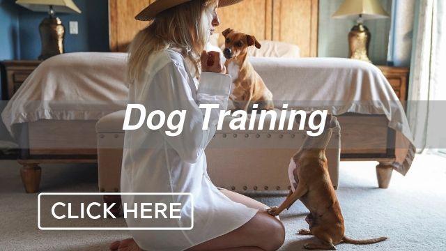 Dog Training Category