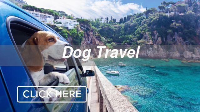 Dog Travel Category