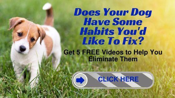 Eliminate Bad Dog Habits