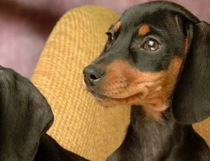 The 10 Best Dog Beds for Dachshunds