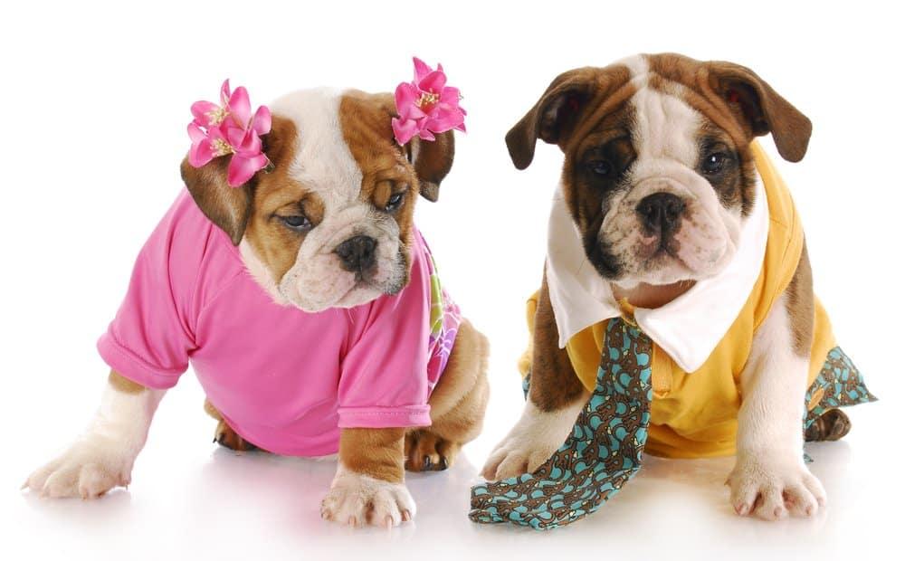 choosing between female and male dog