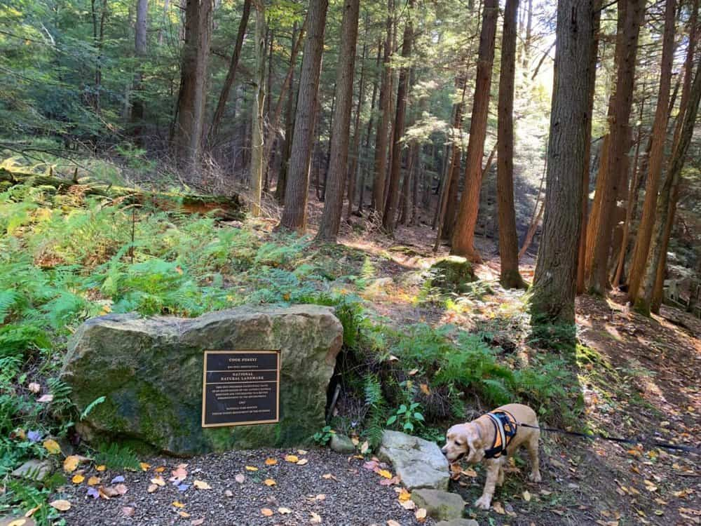 cook forest state park stone with franklin