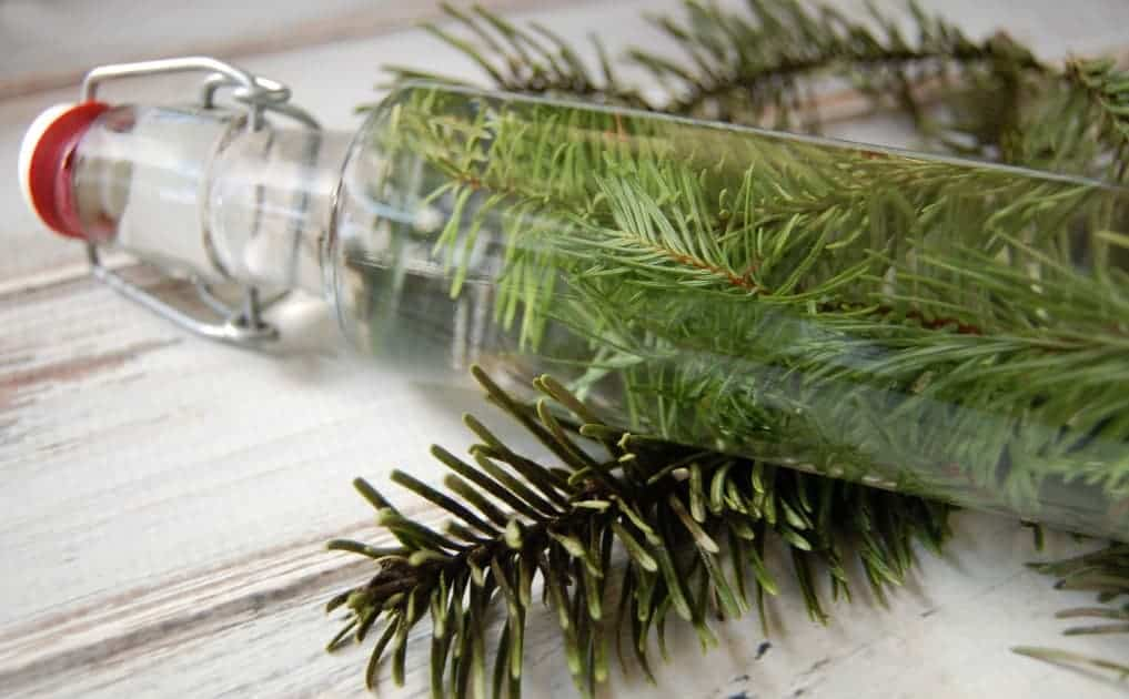 Start hunting down those pine needles! This rejuvenating pine vinegar hair rinse will be your new favorite way to condition your hair!