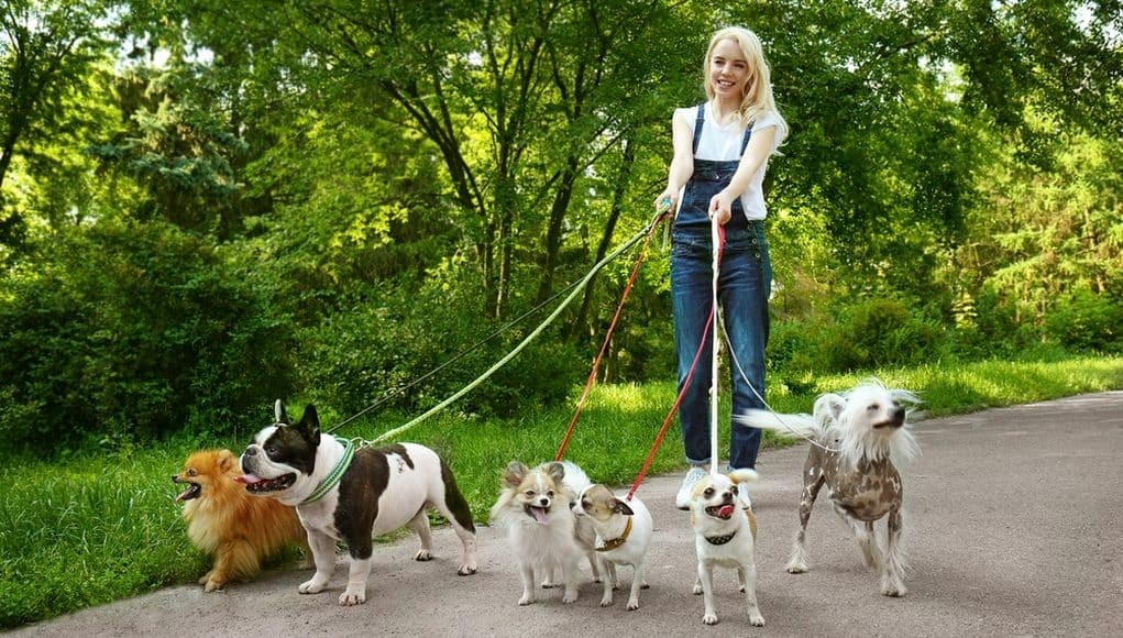 Dog Walker: How to Find the Time to Get Out With Your Dog 2
