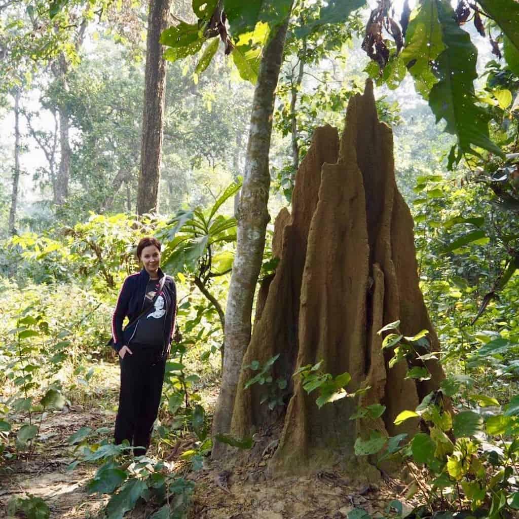 Riesige Termitenhaufen im Süden von Nepal