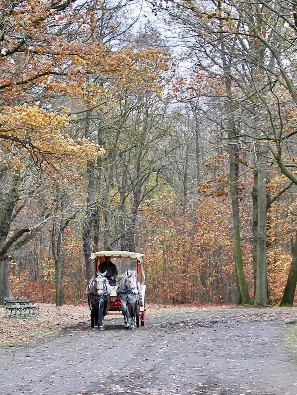 Mit der Kutsche um Schloss Moritzburg