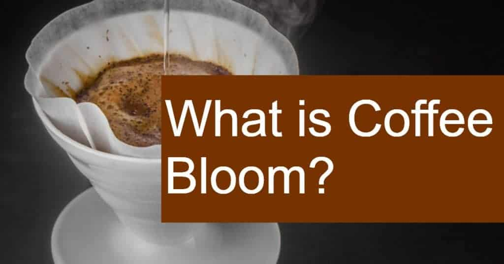 What is Coffee Bloom?