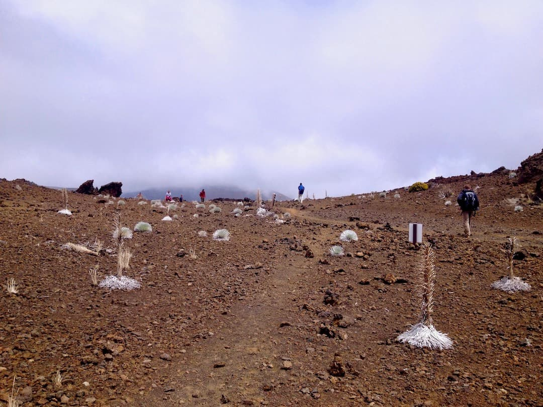 verblühte Silversword Haleakala-Krater
