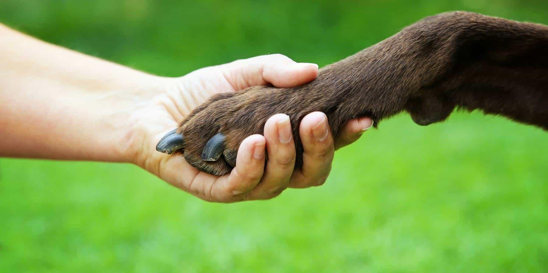 dog-obedience-services-near-me-sarasota-lakewood-ranch-bradenton-parrish-ellenton-palmetto-3