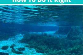 Rainbow Springs Tubing_ How To Do It Right