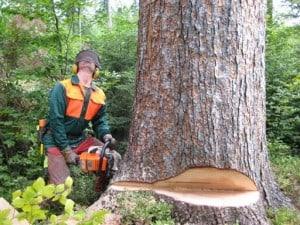 Naturnahe Holzernte