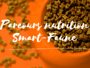 formation nutrition chien chat