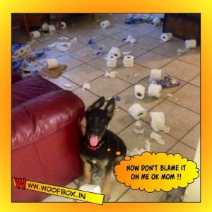 WoofBox Blog - Is it possible to Keep a house clean when you have Pets?