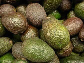 Is avocado oil healthy?