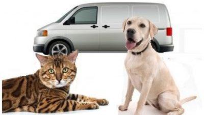 formation TAV transport d'animaux vivants