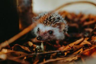 Animalerie en ligne / boutique pour hérisson / faune sauvage urbaine
