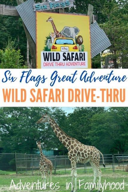 six flafs wild safari sign and giraffes