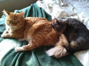 two cats purring