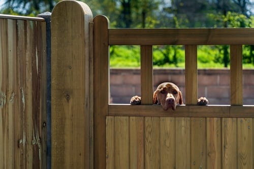 How to Choose a Fence for Your Dog 2