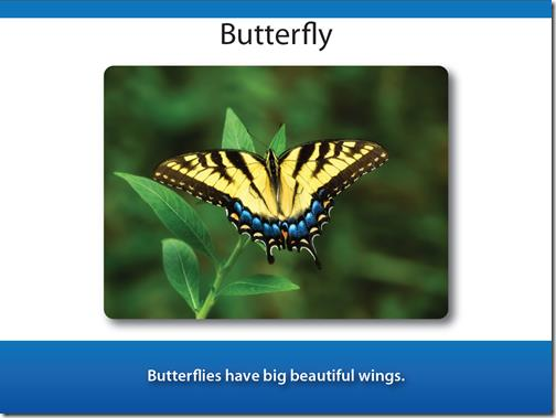 Blue manor butterfly