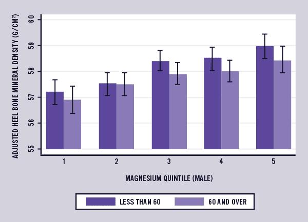 male magnesium and bone density