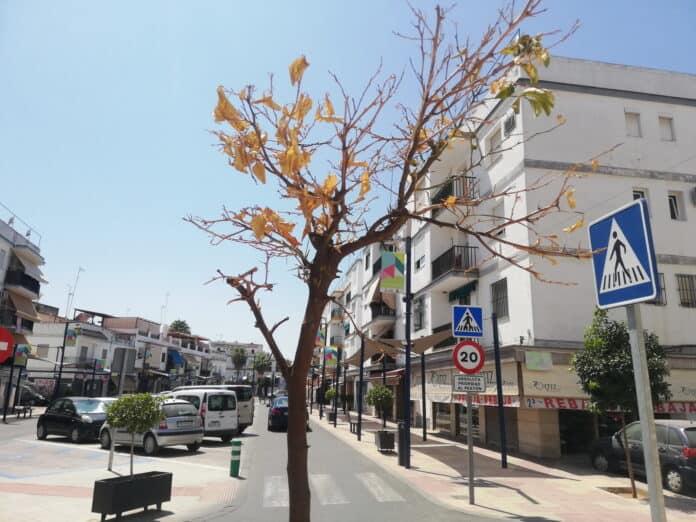 Los naranjos se secan en las calles de Lora del Río