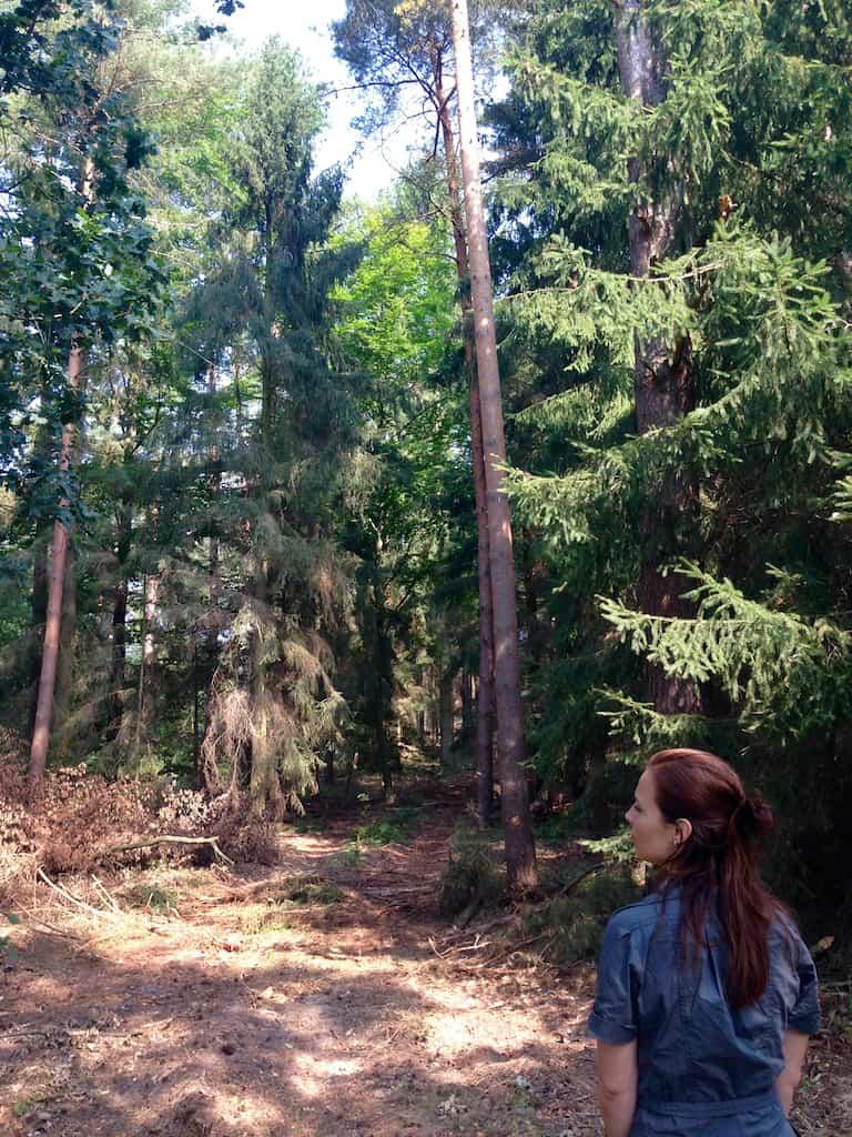 Wald im Wendland