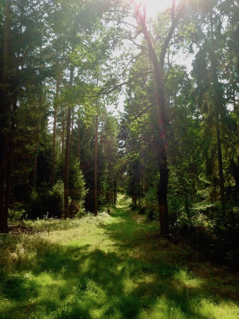 Erholsam: Waldspaziergang