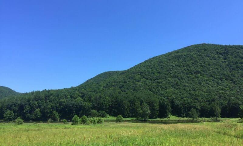 sinnemahoning state park landscape