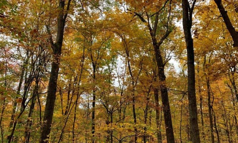 cedar creek state park wv yellow fall