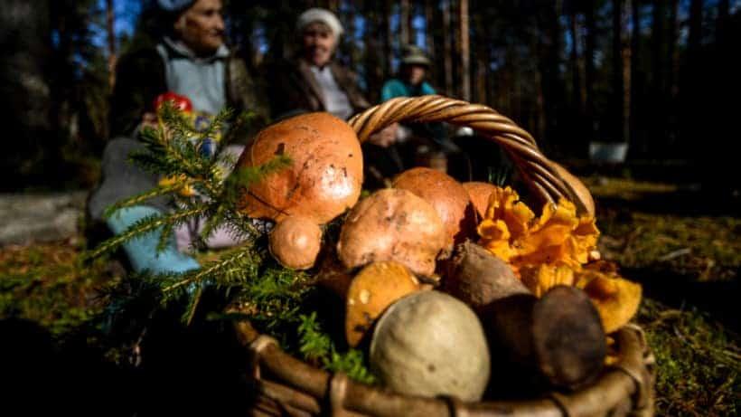Безопасность грибников в лесу