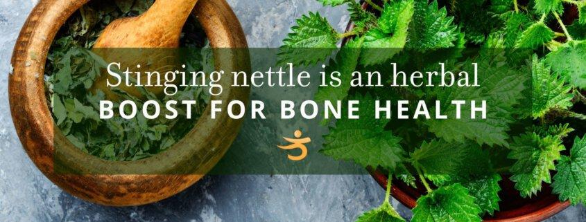 Herbal boost for bone health