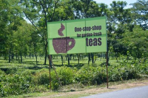 Batabari Tea Estate