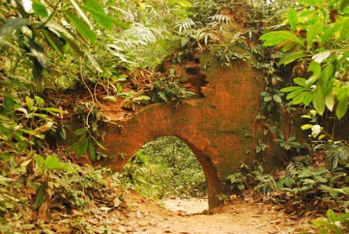 Chilapata Jungle