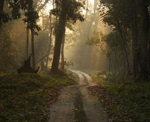 Forest-Near-Gorumara-is-the-Lataguri