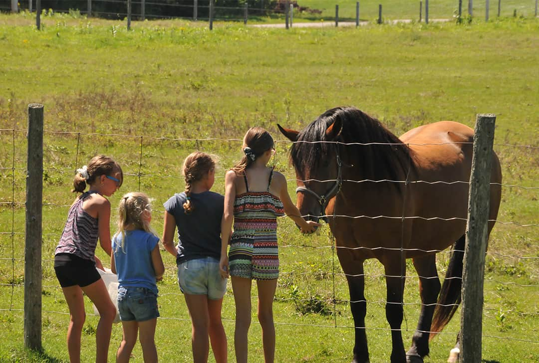 Mini-farm with animals to feed and cuddle at Camping Lac-Saint-Michel
